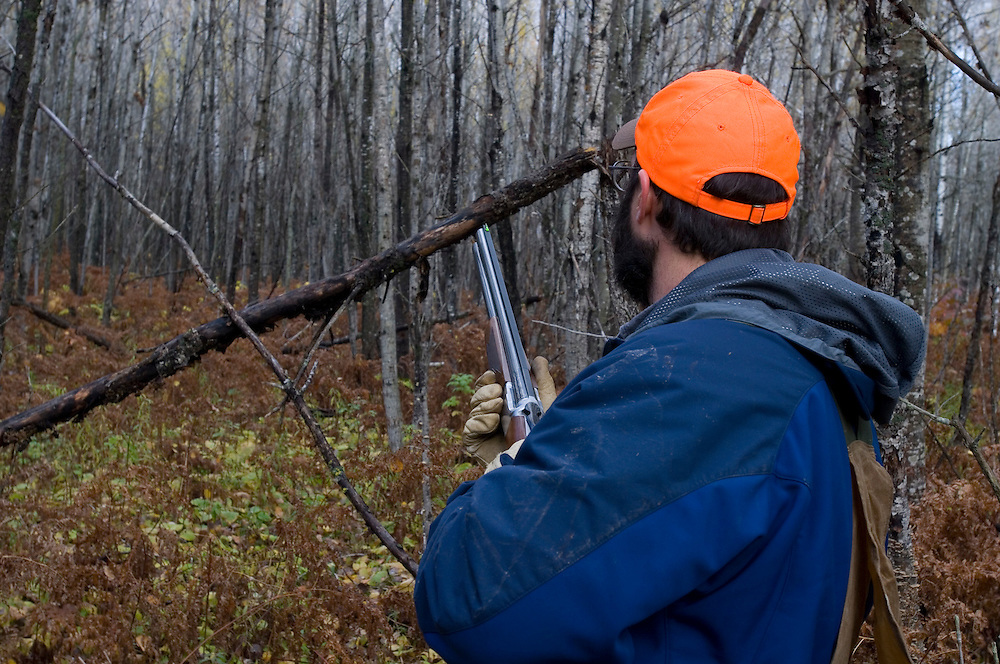 A left-handed hunter pursues grouse and woodcock in aspen stands near Gwinn Michigan.