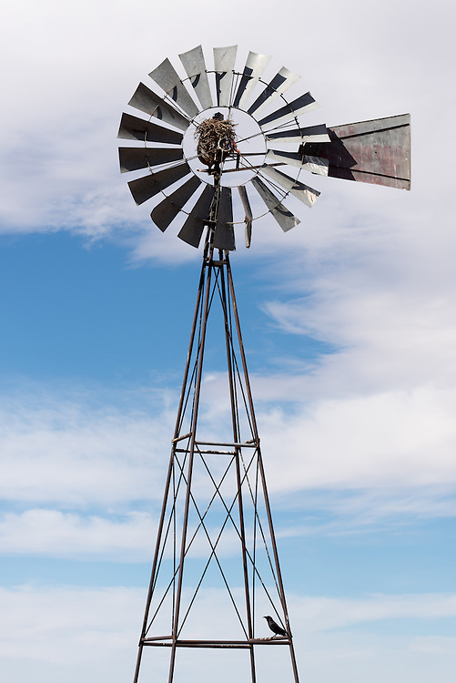 Raven and nest on a windmill in New Mexico's Tularosa Basin.