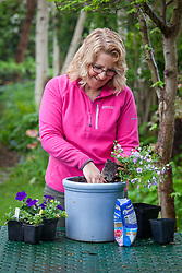 Planting up a container of summer bedding plants.