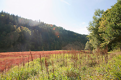 View of marsh area in Harz National Park