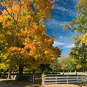 Fall colors at Appleton Farms & Grass Rides, Hamilton, Massachusetts