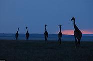 Kenya: Animals of the Masai Mara