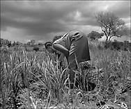 Women weeding the field crops - West Nile, Moyo District, Uganda.
