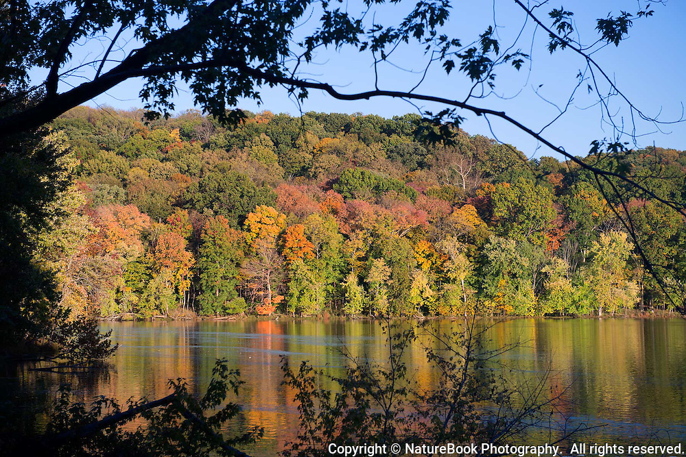 Fall colors are in full glory at Radnor Lake State Natural Area just south of Nashville, Tennessee.  The late afternoon sun highlights the colorful trees, as well as their reflection in the lake.