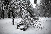 Bialystok, 26.01.2017. Po całodobowych obfitych opadach sniegu miasto zostalo przykryte 30 cm warstwa bialego puchu. Szczegolnie uroczo wygladaly miejskie parki N/z osniezone drzewa w Parku Zwierzynieckim, polamane pod naporem mokrego sniegu drzewo fot Michal Kosc / AGENCJA WSCHOD
