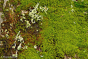 Exposed moss and lichens gave color to thw white landscape in the Commonwealth Basin.