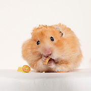 20120924 Hamsters for Will