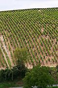 Vineyard. Domaine de la Perriere, Sancerre, Loire, France