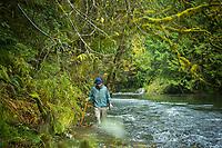 Fly fishing North Fork of the Nehalem River, Oregon.