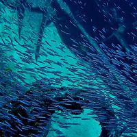 Silversides, Oro Verde, Shipwreck, Grand Cayman