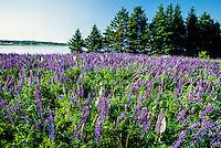 near Oyster Bed Bridge, Prince Edward Island, Canada