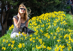 """© Licensed to London News Pictures. 23/02/2021. London, UK. Spring has Sprung. Sarah Lucas 36 enjoys the daffodils in the sunshine with her Cocker Spaniel, Blizzard this afternoon in Richmond, South West London as weather forecasters predict a warm and sunny week ahead with highs of 17c in the South East. Yesterday, Prime Minister Boris Jonson announced his """"Roadmap Map' out of Lockdown with a gradual easing of Covid-19 restrictions with shops, pubs and gyms to open by April, Rule of Six and schools back by March and nightlife back by June. Photo credit: Alex Lentati/LNP"""