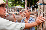 25 JUNE 2011 - SANPATONG, THAILAND:  Buffalo buyers and sellers gather at the Sanpatong buffalo market near Chiang Mai, Thailand, June 25. The buffalo market in Sanpatong started as a weekly gathering of farmers and traders buying and selling water buffalo, the iconic beast of burden in Southeast Asia, more than 60 years ago and has grown into one of the largest weekend markets in northern Thailand. Buffalo and cattle are still a main focus of the market, but traders also buy and sell fighting cocks, food, clothes, home brew and patent medicines.    PHOTO BY JACK KURTZ