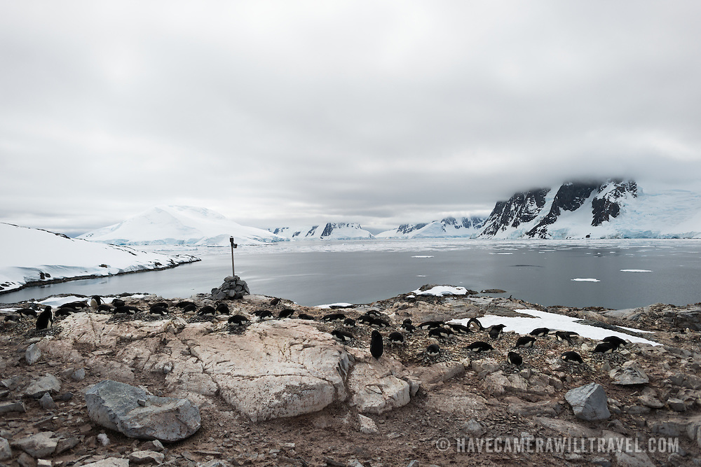 Adelie penguins nesting on a rookery on an exposed area of rock at Petermann Island in Antarctica.