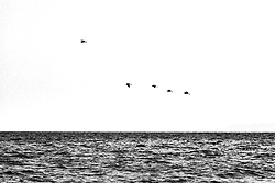 October 8, 2016 - Shanwei, Shanwei, China - Shanwei, CHINA-October 3 2016: (EDITORIAL USE ONLY. CHINA OUT) Birds fly back to their nests in Shanwei, south China¡¯s Guangdong Province, October 3rd, 2016. (Credit Image: © SIPA Asia via ZUMA Wire)