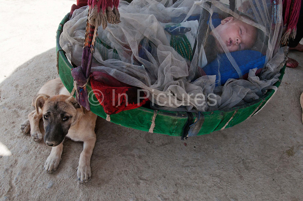 Afghanistan.Kabul. People displaced from Helmand province - over 300 families live in a camp in Charani Qamber district 5, youngest baby of Zarguna (not her real name) who had 4 children killed by aerial bombing in Helmand, sleeping in a hanging basket, protected by a dog.