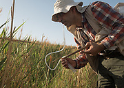 A lepidopterologist collecting insects with a self-made insect catcher.