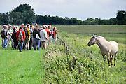 Nederland, Kekerdom, 16-6-2011Een groep natuurliefhebbers bekijken een Konikpaard in de Millingerwaard. Onder leiding van een gids worden hier vaak excursies en wandeltochten gehouden.Foto: Flip Franssen/Hollandse Hoogte