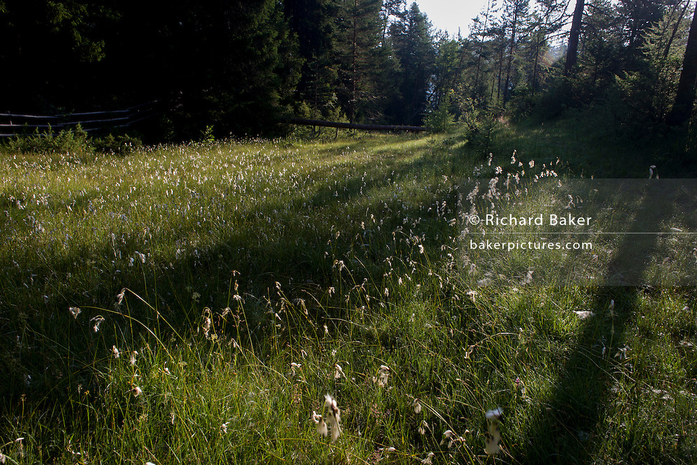 Morning light in the wild meadow near the rural lake 'Lêch della Lunch' in the Badia Dolomites, south Tyrol. Italy.