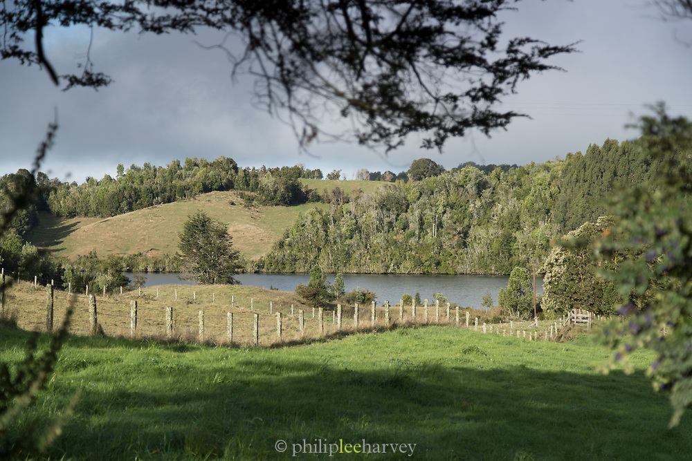 View of hills and trees from behind tree branch, San Juan, Dalcahue, Chiloe Island, Chile
