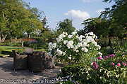 Nicotiana alata 'Grandiflora', Rosa 'Gertrude Jekyll', Rosa possibly 'Iceberg' with garden table and chairs - September