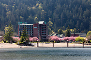 Cherry blossoms in full flower on trees near the Harrison Hot Springs Resort in Harrison Hot Springs, British Columbia,Canada.  Photographed from the trail around Harrison Lagoon.