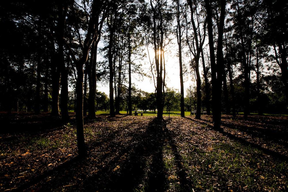 Uberlandia_MG, Brasil...Arvores do Parque do Sabia em Uberlandia, Minas Gerais...The Sabia Park in Uberlandia, Minas Gerais. ..Foto: BRUNO MAGALHAES / NITRO