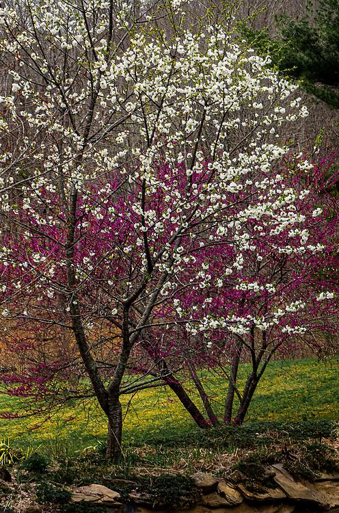 Early flowering trees.