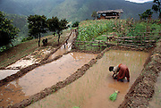 Planting rice in the terraced paddies in the Punakha Valley, Bhutan. From Peter Menzel's Material World Project.