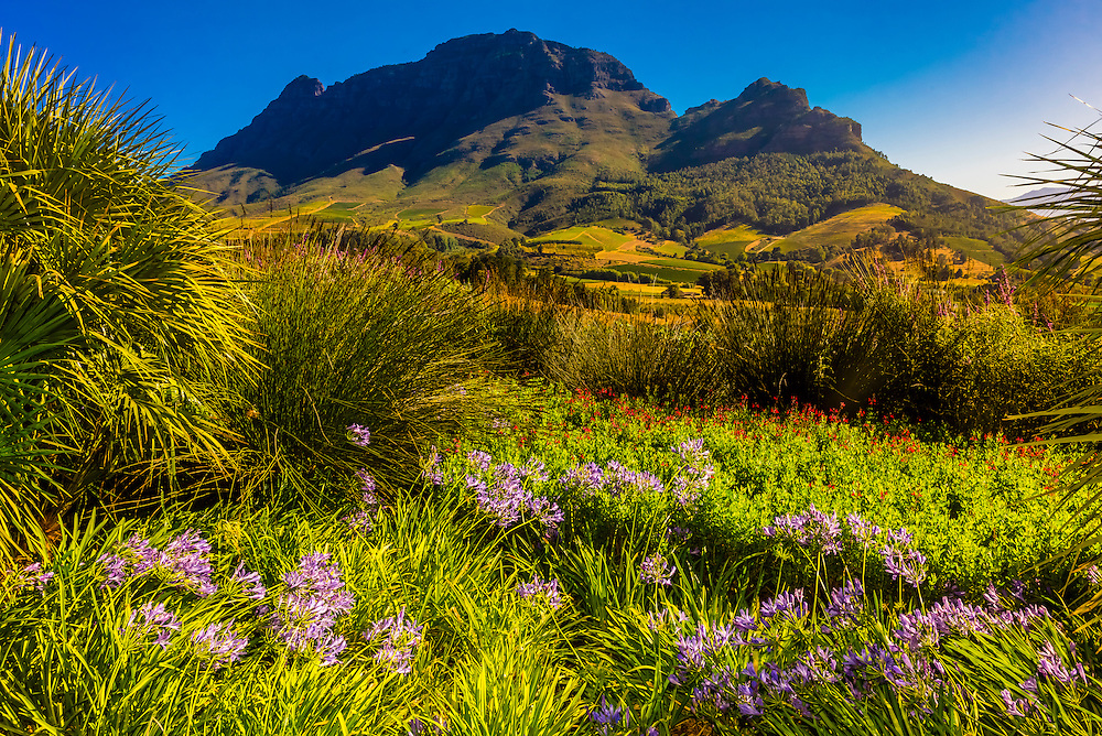 Delaire Graff Wine Estate atop Helshoogte Pass, near Stellenbosch, Cape Winelands (near Cape Town), South Africa.