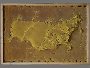 "Artist works with Bees To Create Beautiful maps of the the world using bees wax<br /> <br /> Ren Ri cooperated with bees to create art works"" Yuansu series"". Yuansu . Yuansu II, which is built on acrylic boxes, is the art work made when cooperating with bees.<br /> <br /> Ren Ri  said ""I change the gravity direction of the honeycomb every seven days by rotating the box. In the whole Yuansu series, I try to eliminate the absolute domination of the artist. Bees cooperating with artist can be seen as a relationship between human and nature'<br /> <br /> Photo shows: Russia<br /> ©Ren Ri/Exclusivepix Media"
