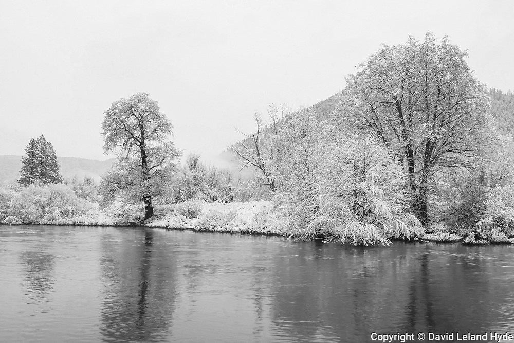 Black Oaks on Indian Creek, Genesee Valley Ranch, Sierra Nevada Mountains, Black and White Art, Genesee, California Mountains, Winter Scenes, Sierra Nevada Mountains, Mountain Ranch, Mountain Valley Living, fresh snow, Black and White Photography
