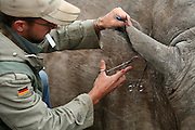 South Africa | Madikwe Game Reserve