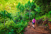 Lush vegetation along the Kalalau Trail, Na Pali Coast, Kauai, Hawaii USA