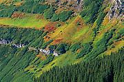 Alpine vegetation on mountain slope<br /> Waterton Lakes National Park<br /> Alberta<br /> Canada