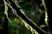 Pocos de Caldas_MG, Brasil...Reserva Particular do Patrimonio Natural (RPPN) em Pocos de Caldas, Minas Gerais...Private Natural Heritage Reserve (RPPN) in Pocos de Caldas, Minas Gerais...Foto: JOAO MARCOS ROSA / NITRO
