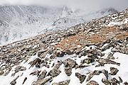 Wind swept ridge below Pawnee Peak, Indian Peaks Wilderness, Rocky Mountains, Colorado.