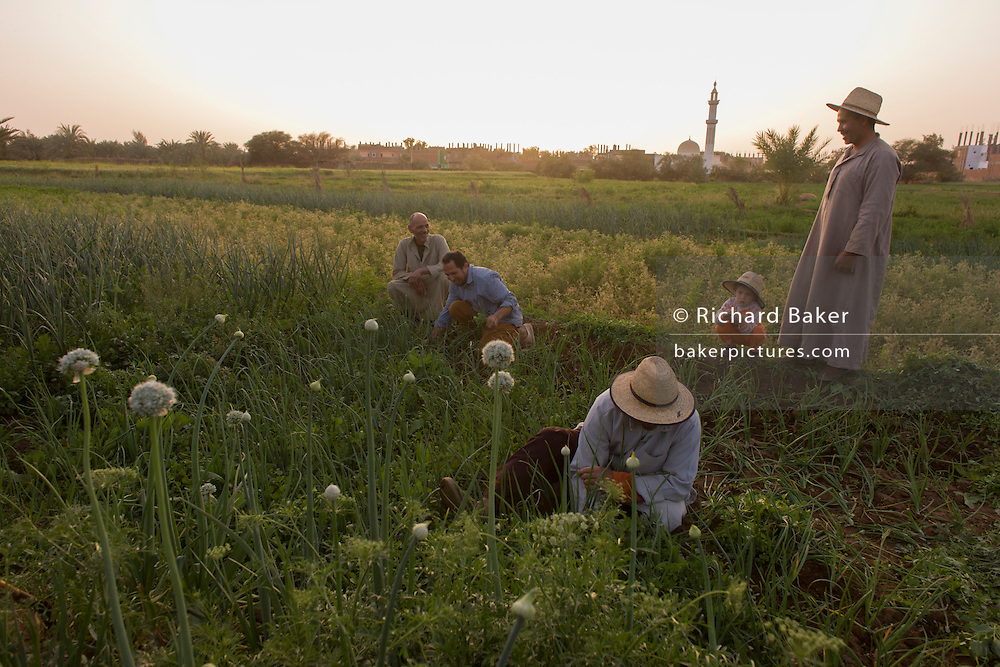 A farming family tend onions and other vegetables in fertile fields where agriculture is important for survival, at Bedhal in Dahkla Oasis, Western Desert, Egypt where the availability of water determines the agricultural economic life in an oasis village. Dakhla Oasis consists of several communities, along a string of sub-oases. The main settlements are Mut (more fully Mut el-Kharab and anciently called Mothis), El-Masara, Al-Qasr, Qalamoun, together with several smaller villages. Some of the communities have identities that are separate from each other. Qalamoun has inhabitants that trace their origins to the Ottomans.