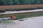 AREJMA Man canoeing past reedbeds River Deben Woodbridge, Suffolk, England