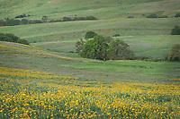 Wildflowers in Columbia Hills State Park Washington