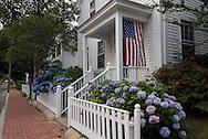 Massachusetts, Martha's Vineyard, Edgartown, House with Lacecap Hydrangea