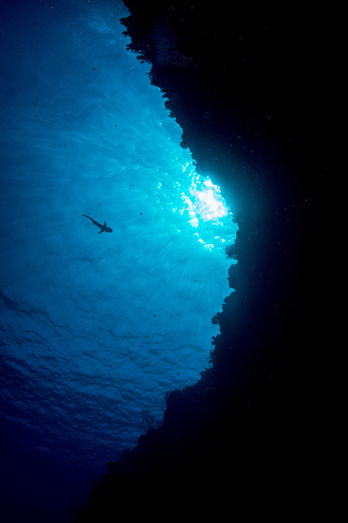 The silhouette of a shark swimming towards a coral reef. Palau.