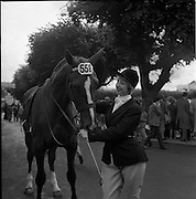 "07/08/1962 <br /> 08/07/1962 <br /> 07 August 1962 <br /> Dublin Horse show at the RDS, Ballsbridge, Dublin, Tuesday. Image shows 18 year old Miss Heather C. Stewart, Lisburn, Co. Antrim and Hunter Gelding ""Capella"" at the show."