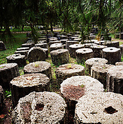 Fallen Ionic and Doric columns lay in the undergrowth at Olympia, Peloponnese, Greece. The 29th modern Olympic circus came home to Greece in 2004 and in the birthplace of athletics and the Olympic ideal, amid the woodland of ancient Olympia where for 1,100 continuous years, the ancients held their pagan festival of sport and debauchery here. These fluted columns that date to about 400BC that now lie in the shade were originally piled on top of each other to construct - among other buildings too - the Temple of Zeus. There, the athletes made offerings to Nike, the Goddess of Victory before going out to compete in the many sports. The modern games share many characteristics with its ancient counterpart. Corruption, politics and cheating interfered then as it does now.