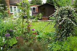 Looking over border towards shed - weeping Cotoneaster dammeri 'Coral Beauty' in the foreground syn. C. suecicus Coral Beauty