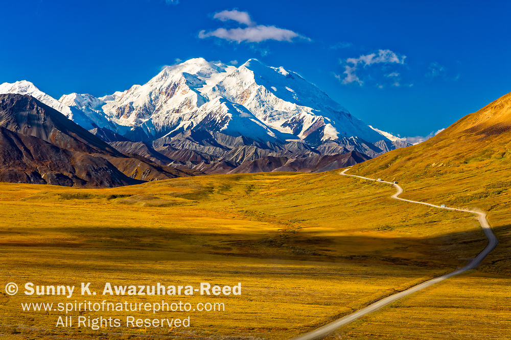 Mount Denali (McKinley), viewed from Stony Hill. Fall color tundra and Park Road are in the foreground.  Denali National Park & Preserve, Alaska, Autumn.