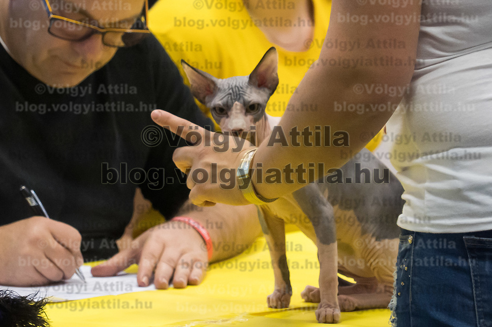 Judge inspects a cat at the international cat show in Budapest, Hungary on Nov. 17, 2019. ATTILA VOLGYI