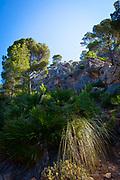 Reserva Biológica de la Trapa, Sant Elm, Mallorca, Balearic Islands, Spain