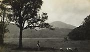 Landschap, vermoedelijk op Oost-Java, 1928 - 1932
