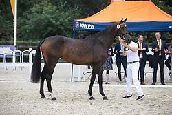 011, Marian OD<br /> Nationaal Kampioenschap KWPN<br /> 3 jarige springmerries<br /> © Hippo Foto - Dirk Caremans<br />  15/08/2020